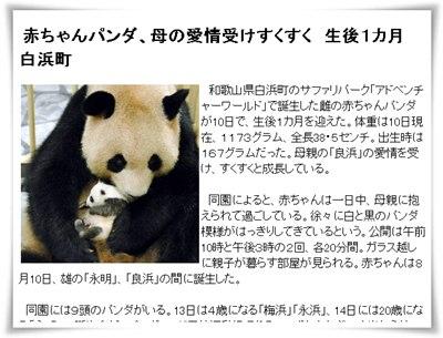 白浜の赤ちゃんパンダの生後1か月を報じるweb新聞