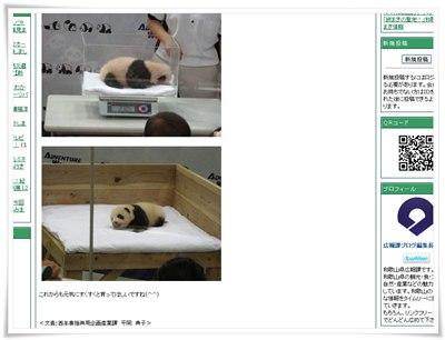 和歌山県広報ブログのパンダの記事のキャプチャ画像